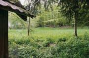 «Riedwiese und naturnaher Wald»: Das Gebiet «Im Grund» liegt heute in der Wohn-Gewerbezone. Der Stadtrat möchte, dass dies so bleibt. (Bild: Tobias Hänni)