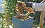 Seit die Varroamilbe die Bienen befallen hat, ist die Imkerarbeit viel aufwendiger und komplizierter. (Bild: Sabrina Schmid)