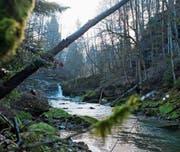 Bis auf Weiteres dürfen die Wasser der Thur unbedarft weiterfliessen. Ausser den bereits bestehenden Kleinwasserkraftwerken im Flusslauf werden derzeit keine neue gebaut. (Bild: Olivia Hug/Februar 2014)