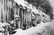 Im 1. Quartal 1963 zeigte sich die Landschaft zwischen Wolfhalden und Walzenhausen in Eis erstarrt. (Bild: egb)