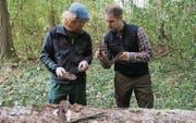 Die Revierförster Marco Signer und Renaldo Vanzo müssen sich auch mit dem Borkenkäfer unter der Rinde beschäftigen. (Bild: Martin Brunner)