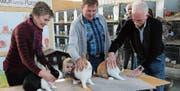 Vreni und Viktor Jung sowie Martin Hollenstein, Präsident des schweizerischen Holländerklubs, präsentieren ihre Kaninchen (v.l.). (Bilder: Tim Frei)