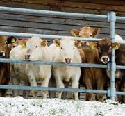 Die Schweizer Landwirtschaft wird schon lange mit hohen Zöllen geschützt. (Bild: Sigi Tischler/KEY)