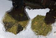 Regen, Regen, Regen: Im Toggenburg ist es derzeit besonders nass. (Bild: LUKAS LEHMANN (KEYSTONE))