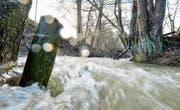Gülle floss bei Hagenwil in den Hegibach und verursachte ein Massensterben. Der Bach erholte sich seither nur langsam. (Bild: Donato Caspari)