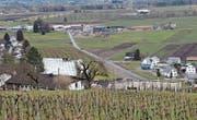 Dieser Grünstreifen mit kleiner Baumreihe ist die vom Kanton gewünschte symbolische Grenze zwischen Marbach und Rebstein. (Bilder: Gert Bruderer)