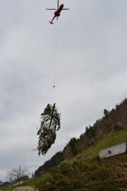 Das Schadenholz wird per Helikopter aus dem steilen Schutzwald bei Wildhaus geflogen. (Bild: Adi Lippuner)