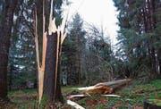 Einer von vielen geknickten Bäumen in der Region, hier oberhalb Abtwils. (Bild: Leserbild: Ingrid Zürcher)