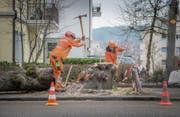 Der Baum, gegen den das Postauto geprallt ist, wurde gestern gefällt. (Bild: Urs Bucher)