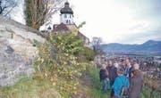 Eine deutlich faule, von Pflanzen durchwachsene Mauer: Thomas Oesch (3. v. r.) auf einer der Führungen. (Bilder: Maya Schmid-Egert)