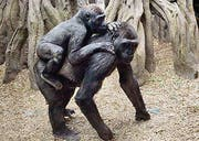 Wichtiger Schutz durch die Mütter. (Bild: ap)