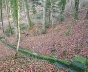 In diesem Waldstück lag der Teppich mit der Leiche. (Bild: Mario Testa)