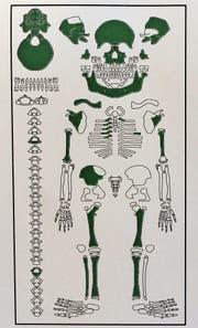 Die gefundenen Knochen des Kinderskeletts (grün markiert)