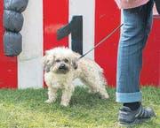 SCHNITT: Hundefrisbee Weltmeisterschaft (Bild: Urs Bucher (Urs Bucher))