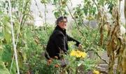 Geschäftsführerin Sabina Gränicher fühlt sich im hauseigenen Gemüsegarten der Wirkstatt Auboden sichtlich wohl. (Bild: Urs M. Hemm)