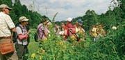 Die Wanderer zeigten sich sehr interessiert für die Kräuter und Heilpflanzen am Wegesrand. (Bild: PD)