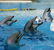 Tierschützer meinen, die Delphine im Connyland würden leiden. (Archivbild: Reto Martin)