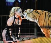 Dompteurin Carmen Zander belohnt ihre fünf Königstiger zum Schluss jeweils mit einem Kuss. (Bild: Reto Martin)