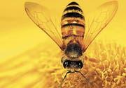 Mit dem berühmten Film von Markus Imhoof will die IG Bienenfreunde die Bevölkerung im Rheintal für den Schutz und die Förderung der Honigbiene sensibilisieren. (Bild: pd)