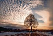Letzter Schnee auf dem Freudenberg: Das Kalenderbild im März. (Bild: Sandro Reichmuth)