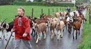 Auch 42 Ziegen verbrachten den Sommer auf den Alpen der Ortsgemeinde Wartau. (Bild: Katharina Rutz)
