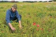 Vor lauter Blumen und Kräutern kaum zu sehen: Peter Trunz zeigt eines der Tännchen, welche er vor zwei Jahren gesetzt hat. (Bild: Urs Bänziger)