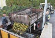 Bis Mitte November können die Bauern in Waldkirch Obst anliefern. Die Firma Möhl Arbon presst dann Saft daraus. (Bild: Manuela Bruhin)