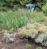 Die Pflanzen im Südafrika-Beet fangen an zu blühen. (Bild: Miryam Koc)