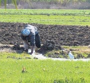 Das Nilwasser für die Bewässerung gelangt via Kanäle zu den Feldern. (Bild: zVg)