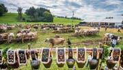Schauplatz Rietwies in Häggenschwil: 500 Besucherinnen und Besucher beäugten am Samstag 300 Kühe von mittlerweile vier verschiedenen Rassen. (Bild: Urs Bucher)