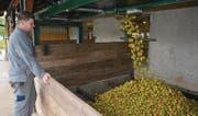 Stefan Fraefel kontrolliert einen der Silos. Vom Förderband «regnet» es nur so von Mostäpfeln. (Bilder: Urs Bänziger)