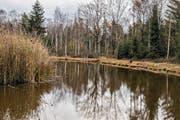 Eine vergessene Stadt soll sich unter dem Naturschutzgebiet Hudelmoos verbergen. (Bild: PD)