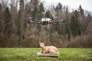 Bei der Weiterbildungsveranstaltung wurde demonstriert, wie Drohnen Rehkitze aufspüren können. (Bild: Hanspeter Schiess)