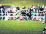 Die Prüfungen an der Hundefrisbee-WM sind eine Herausforderung für Mensch und Tier und erfordern ein perfektes Zusammenspiel. (Bilder: Urs Bucher)