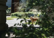 Wechselflor, einjährige Blumeneinsaaten, Mischstaudenbepflanzung: Das Pflanzkonzept des St. Galler Gartenbauamts basiert auf einer ausgeklügelten Orchestrierung. (Bilder: Hanspeter Schiess)