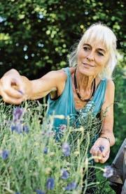 Renate Krautkrämer in ihrem Garten auf dem Rütiberg. Sie zupft Blüten für die Tees der Toggenburger Kräuterfrauen. (Bild: Stephan Bösch)