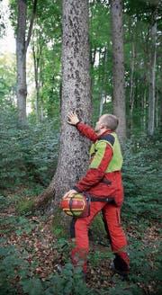 An den Tagen des Schweizer Holzes erlebt man die Wertschöpfungskette des Holzes vom Wald über die Sägerei bis zum Endprodukt. (Bilder: pd)