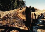 Rund 200 Stämme liegen an der alten Staatsstrasse in Henau bereit. Im Bild Nussbäume aus der Region. (Bild: pd)