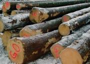Das Fällen von Fichten im Winter bei Neumond war vor 100 Jahren die Regel. Die Qualitäten des Mondholzes werden jetzt wieder entdeckt. (Bild: sth)