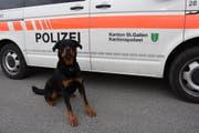 Eine Rottweilerhündin Yodi der Kantonspolizei St.Gallen nahm die Spur des Flüchtigen auf und konnte diesen wenig später in einem Versteck stellen und verbellen. (Bild: Kapo SG)