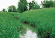 Bäche sind ökologisch wertvoll: Aubach in Eichenwies. (Archivbild: Max Tinner)