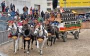 Auch dieses Jahr werden an der Pferdemesse wieder Brauereigespanne durch die Arena auf dem Olma-Areal fahren. (Bild: pd)