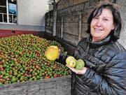 Susanne Kobelt-Weder mit einem Riesenapfel und zwei Zwillingsäpfeln. Im Hintergrund normales Mostobst. (Bild: Max Tinner)