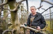 Ivo Sager auf seiner Plantage in Lömmenschwil. Er ist Präsident des Obstbauringes Häggenschwil-Wittenbach. (Bild: Urs Bucher)