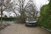 In Schaan stürzte ein Baum auf ein Auto. (Bild: Landespolizei FL)