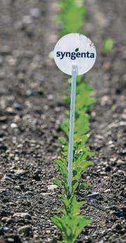 Ein Feld mit jungen Pflanzen: Die Basler Syngenta ist in Pflanzenschutz und Saatgut aktiv. (Bild: Patrick B. Krämer/KEY (Baltenswil, 4. Mai 2014))