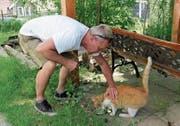 Hungrig ist sie: Diese Katze und eine weitere wurden vom fluchtartig verschwundenen Besitzer zurückgelassen. Christoph Schwabe bringt sie nach Nesslau ins Tierheim, wo sie vorübergehend umsorgt werden. (Bild: Martina Signer)