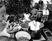 Beim Bohnenspitzeln für die Konservenfabriken packten auch die Kinder mit an; das Bild entstand in den 1940er-Jahren. (Bild: Heribert Hutter, Gemeindemuseum Rothus, Oberriet)