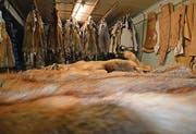 Die Felle eines Jägers liegen bereit, um eine Decke nach seinen Wünschen zu nähen.