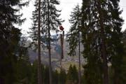 In diesem Waldstück ist der Forstwart tödlich verunglückt. (Bild: Kantonspolizei Graubünden)